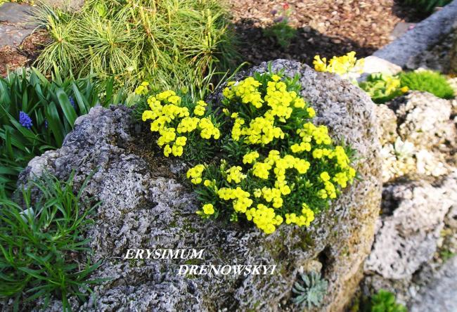 Skalky,skalničky a všeličo do záhrady - Obrázok č. 24