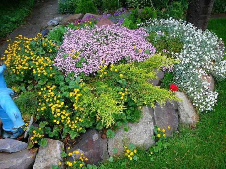 Skalky,skalničky a všeličo do záhrady - Obrázok č. 46