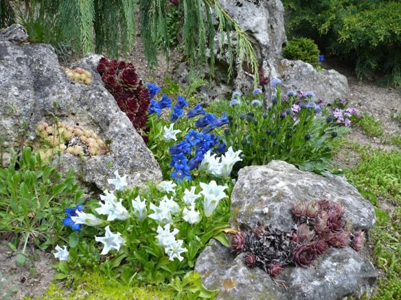 Skalky,skalničky a všeličo do záhrady - Obrázok č. 50