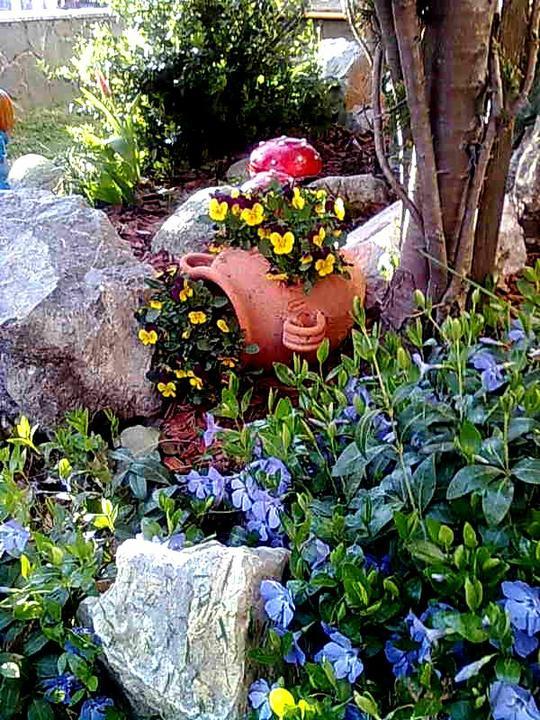 Skalky,skalničky a všeličo do záhrady - modré kvietky-zimozelen je to podopokryvná rastlina