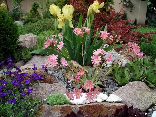 Skalky,skalničky a všeličo do záhrady - Obrázok č. 54