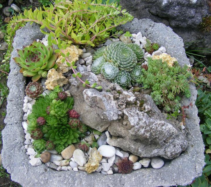 Skalky,skalničky a všeličo do záhrady - Obrázok č. 55