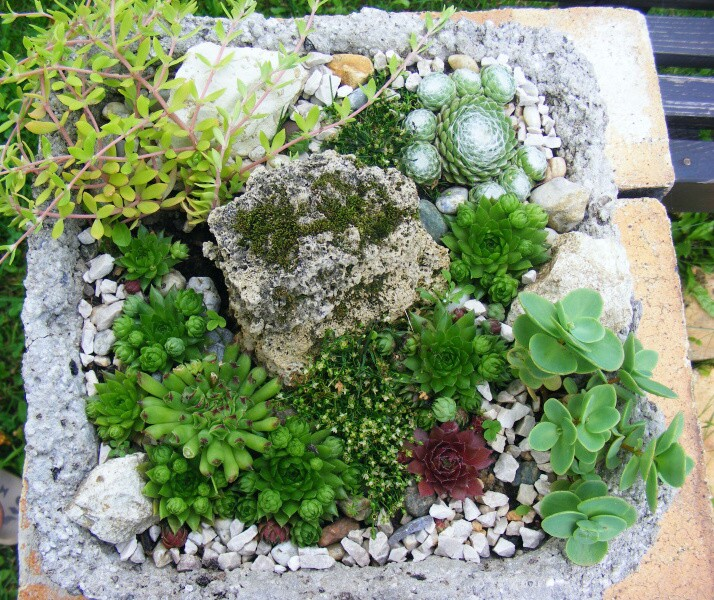 Skalky,skalničky a všeličo do záhrady - Obrázok č. 56