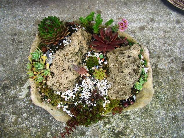 Skalky,skalničky a všeličo do záhrady - Obrázok č. 57
