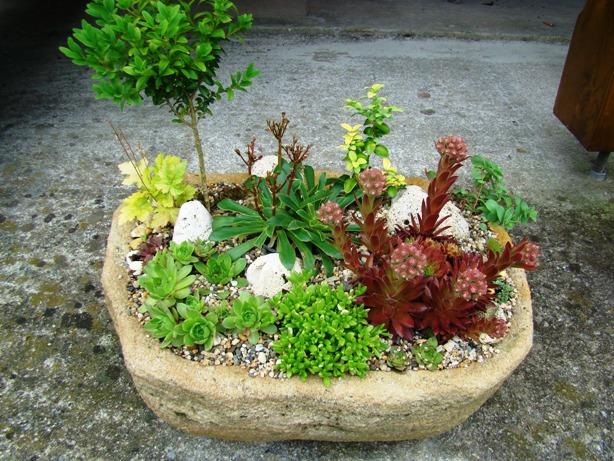 Skalky,skalničky a všeličo do záhrady - Obrázok č. 58