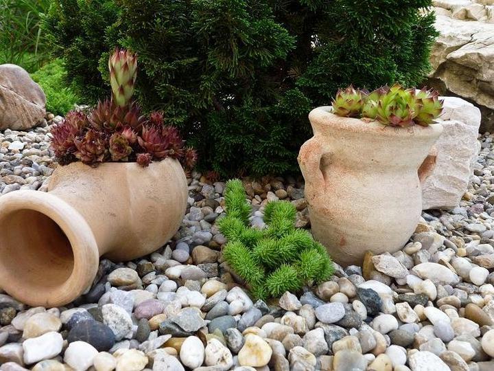 Skalky,skalničky a všeličo do záhrady - Obrázok č. 98