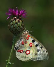 šperky našej prírody