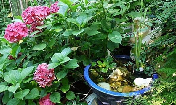 Voda v záhrade - miniatúrne jazierka pre @sirinku