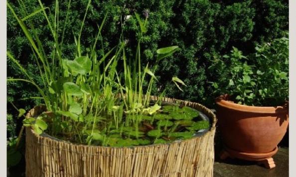 Voda v záhrade - Obrázok č. 121