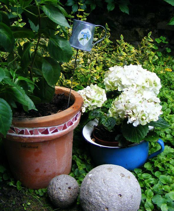 Skalky,skalničky a všeličo do záhrady - Obrázok č. 68