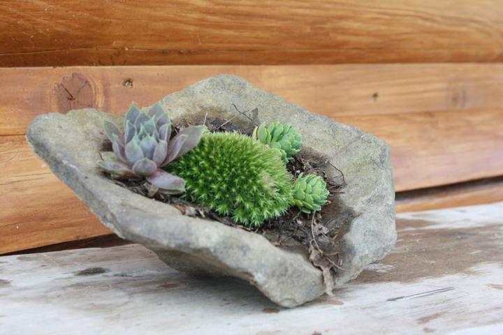 Skalky,skalničky a všeličo do záhrady - v skale
