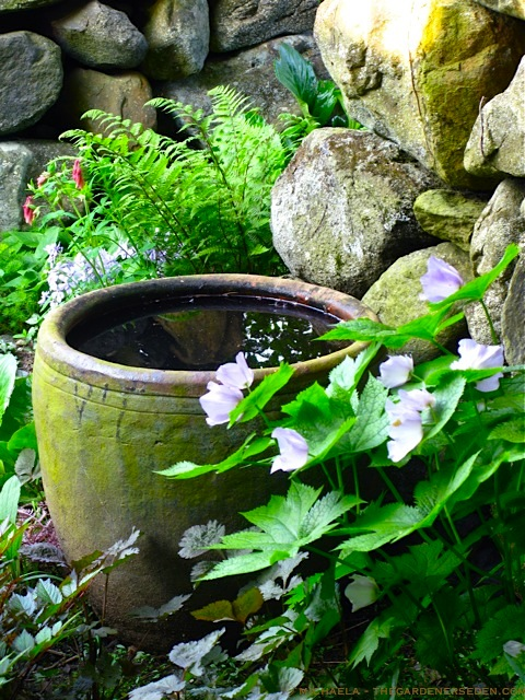 Voda v záhrade - Obrázok č. 122