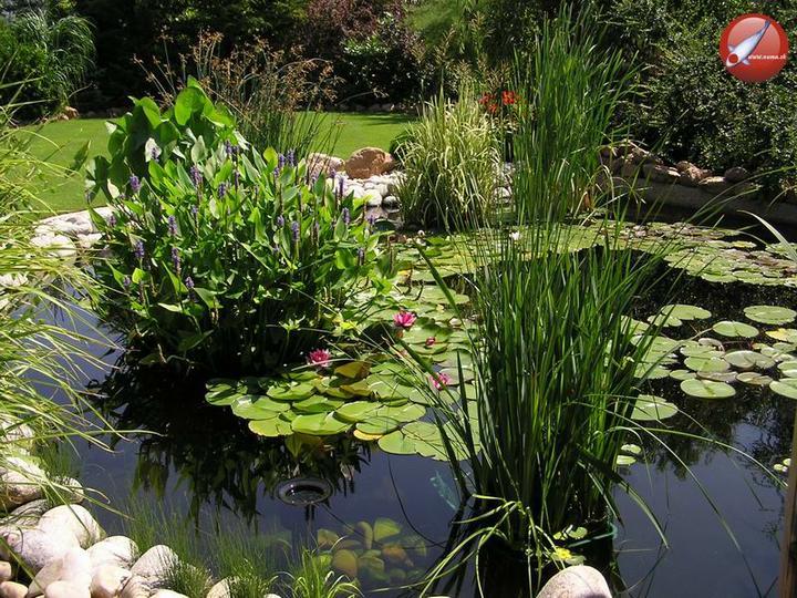 Voda v záhrade - Obrázok č. 126