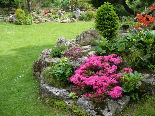 Skalky,skalničky a všeličo do záhrady - azalka v skalke