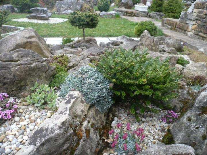 Skalky,skalničky a všeličo do záhrady - Obrázok č. 83