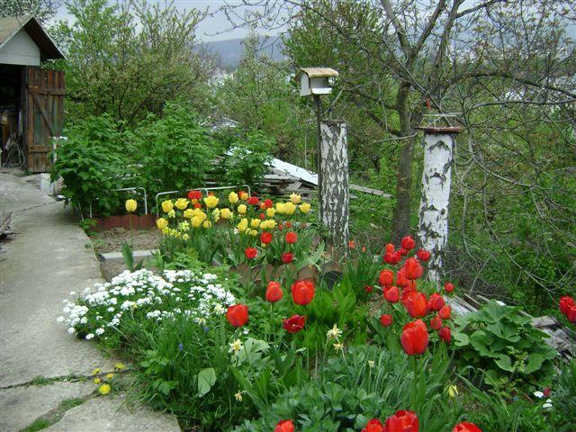 Skalky,skalničky a všeličo do záhrady - jarná