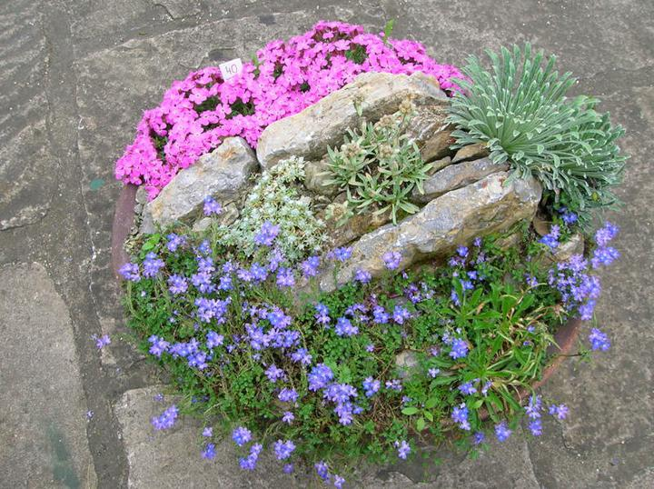 Skalky,skalničky a všeličo do záhrady - malá skalka v kvetináči