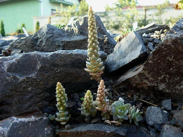 Skalky,skalničky a všeličo do záhrady - Obrázok č. 89