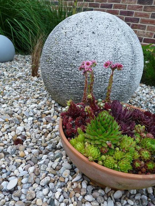 Skalky,skalničky a všeličo do záhrady - Obrázok č. 91