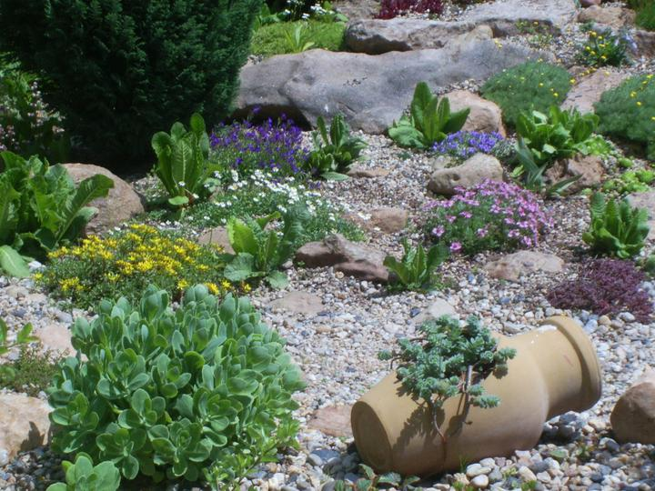 Skalky,skalničky a všeličo do záhrady - Obrázok č. 97