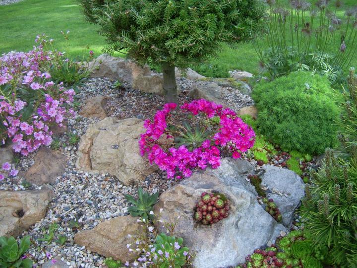 Skalky,skalničky a všeličo do záhrady - Obrázok č. 92