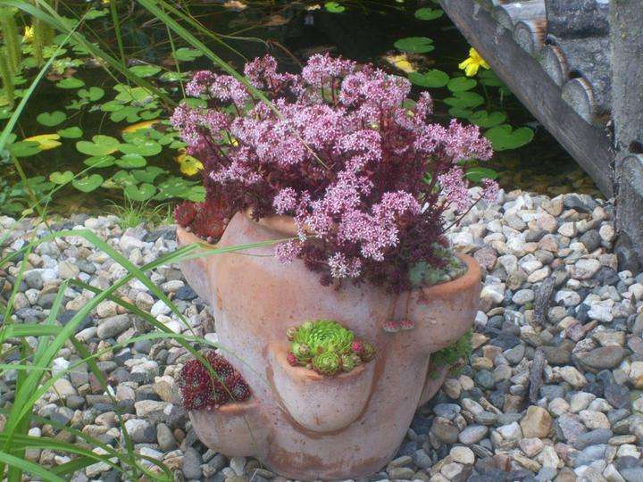 Skalky,skalničky a všeličo do záhrady - Obrázok č. 95