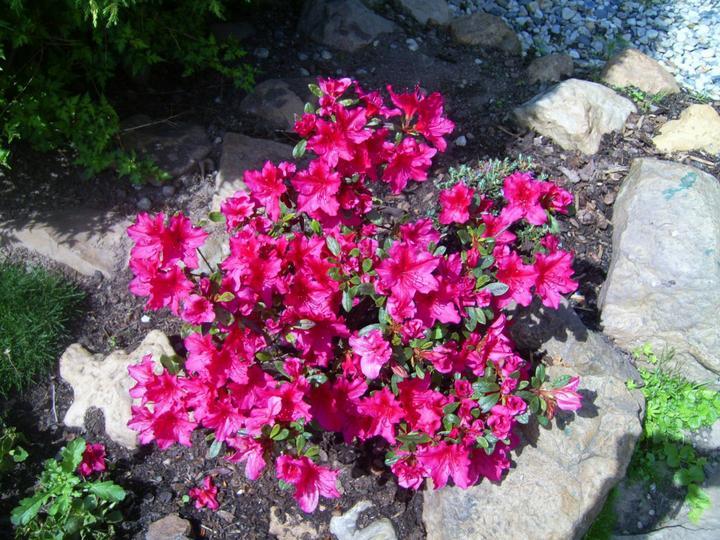 Skalky,skalničky a všeličo do záhrady - Obrázok č. 99