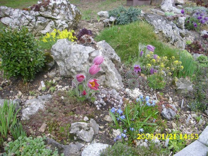 Skalky,skalničky a všeličo do záhrady - Obrázok č. 81