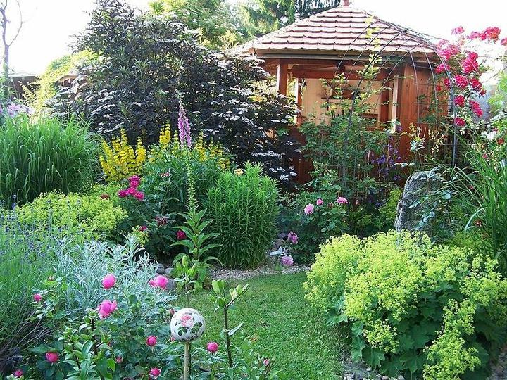 Krása divokej záhrady - Obrázok č. 80