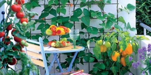 Balkonové a terasové zátišie - aj zeleninku možeme pestovat na balkone
