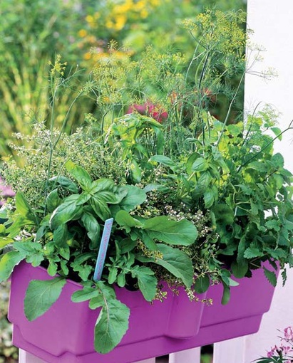 Balkonové a terasové zátišie - bylinky