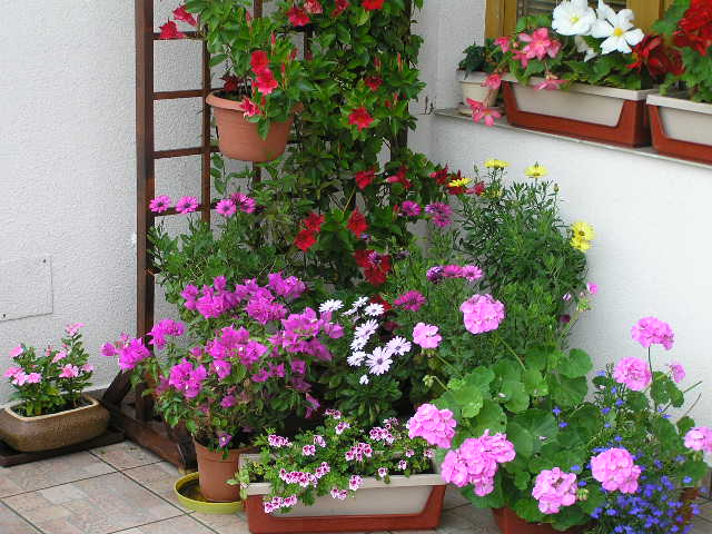 Balkonové a terasové zátišie - Obrázok č. 35
