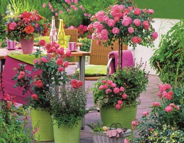 Balkonové a terasové zátišie - Obrázok č. 48