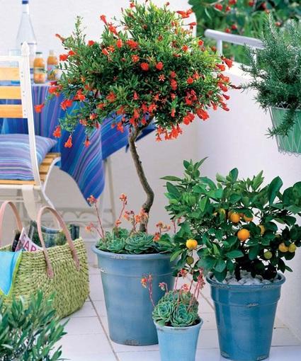 Balkonové a terasové zátišie - Obrázok č. 53