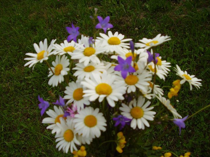 Dekorácie s lúčnymi kvetmi - Nie je nič krajšie,ako sa prebehnút po lúke a natrhat si náruč lúčnych kvetov