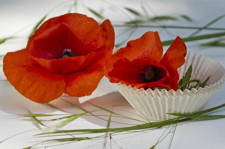 Dekorácie s lúčnymi kvetmi - Obrázok č. 16