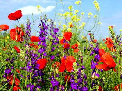 Dekorácie s lúčnymi kvetmi - Obrázok č. 30