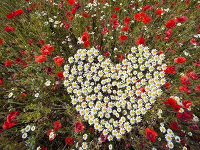 Dekorácie s lúčnymi kvetmi - všetkým romantickým a milým ludom