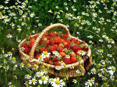 Dekorácie s lúčnymi kvetmi - Obrázok č. 32