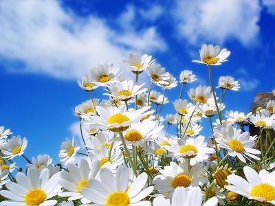 Dekorácie s lúčnymi kvetmi - tá príroda je velká čarodejka