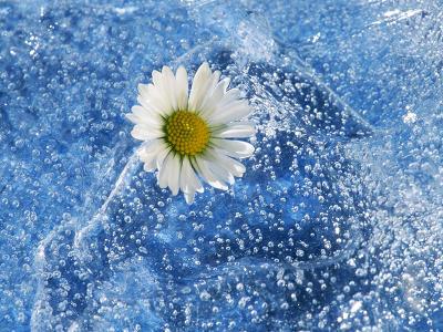 Dekorácie s lúčnymi kvetmi - sedmokrásky sú aj zdravé