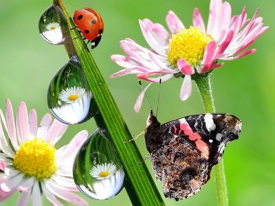 Dekorácie s lúčnymi kvetmi - Obrázok č. 37
