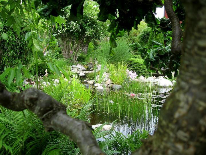 Voda v záhrade - Obrázok č. 157