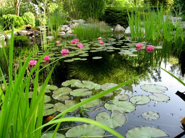 Voda v záhrade - Obrázok č. 158