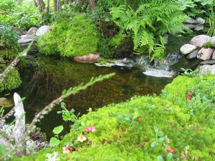 Voda v záhrade - Obrázok č. 160