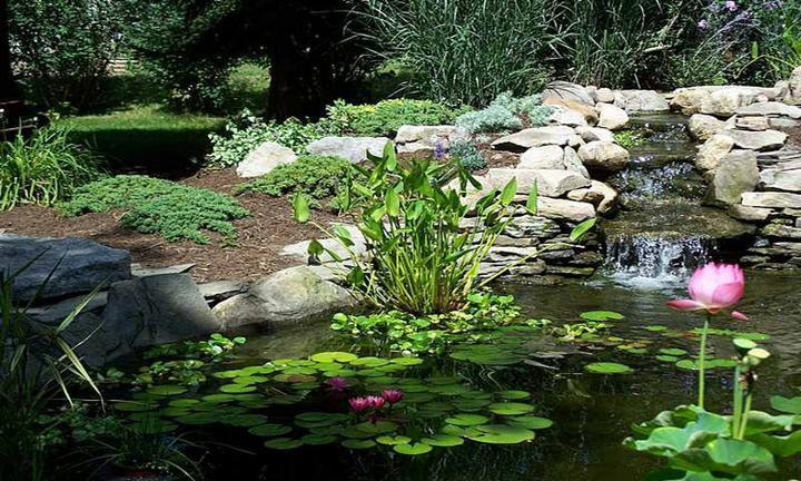 Voda v záhrade - Obrázok č. 161