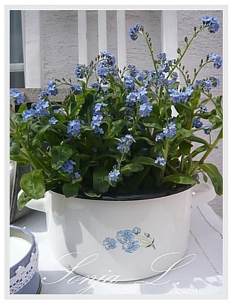 Dekorácie s lúčnymi kvetmi - nezábudky
