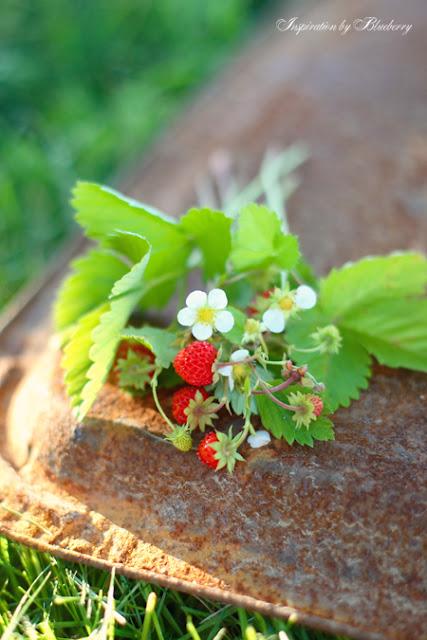 Dekorácie s lúčnymi kvetmi - Obrázok č. 90