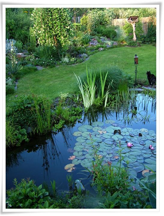 Voda v záhrade - Obrázok č. 172