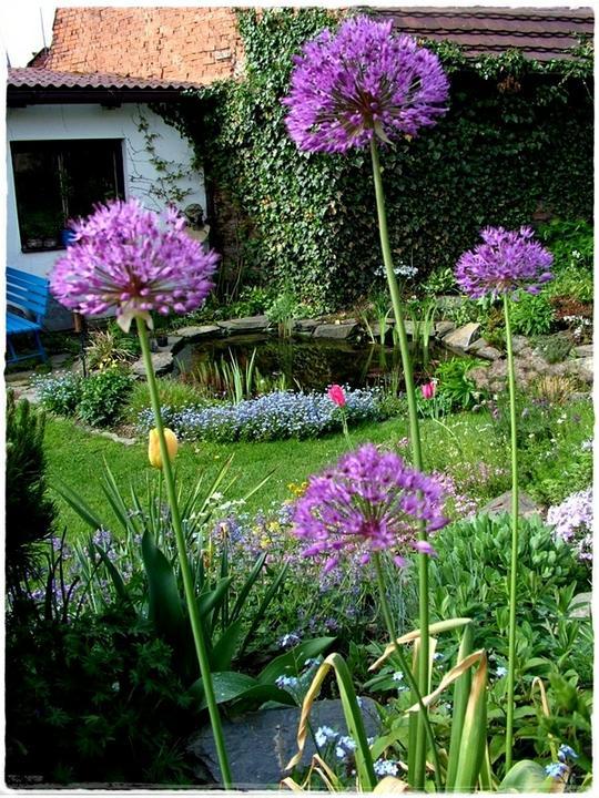 Voda v záhrade - Obrázok č. 175